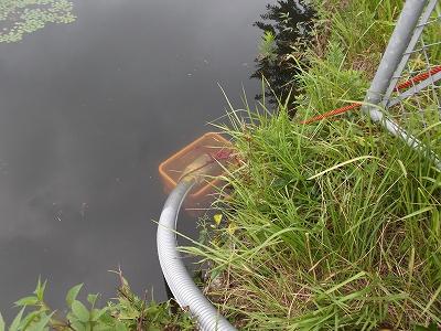 池から水を吸い上げている様子